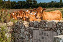 Images For Visit Guernsey - Shot 2012