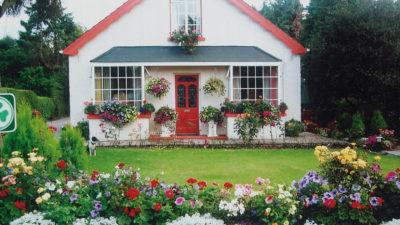 Mystical Rose, Killarney, Irland