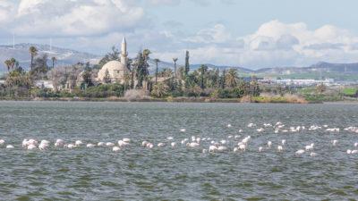 Hala Sultan Tekke, Larnaca, Zypern